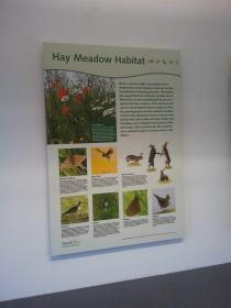Hay Meadow Habitat