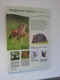 Hedgerow Habitat